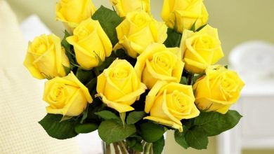 Photo of A Brief Look At The Flower of Friendship – Yellow Roses